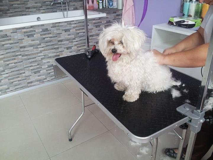 Pet salon Tiffany