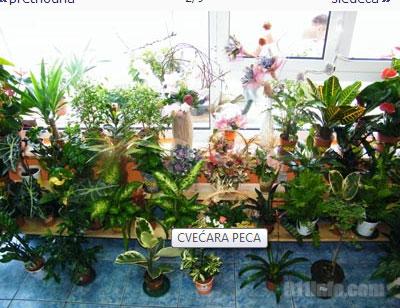 Cvećara Peca