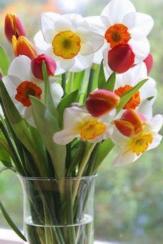 Cvećara Omladinac
