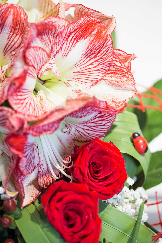 Cvećara Quince Flower