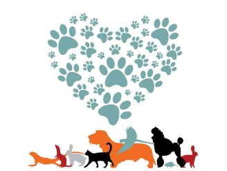 Veterinarska ambulanta Pas, Mačka i …