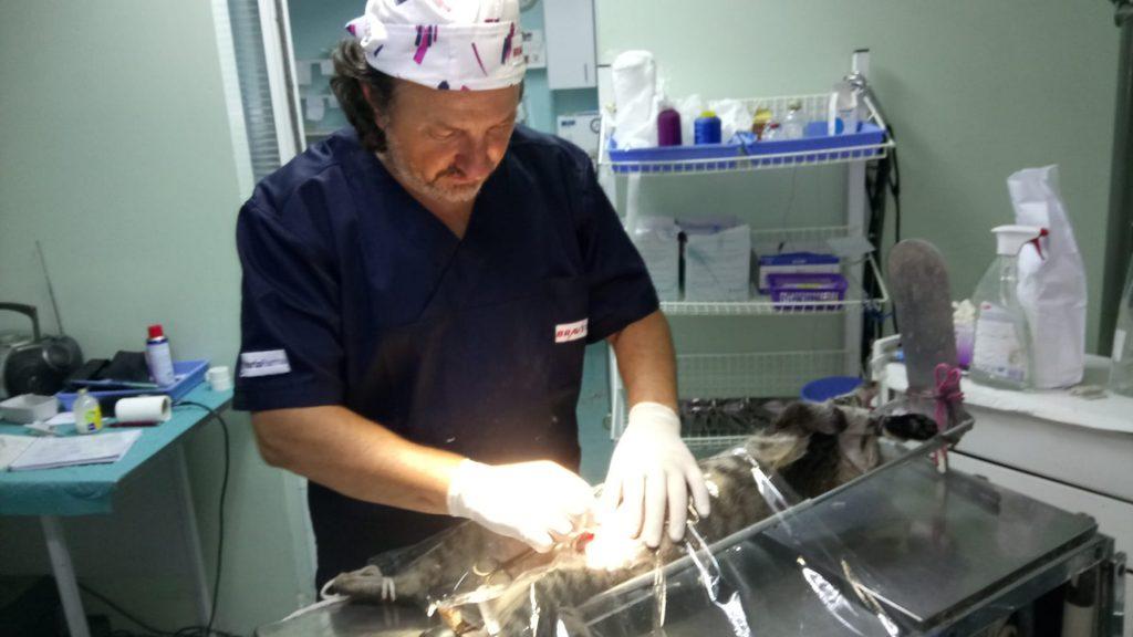 Veterinarska ambulanta SemperaVet Bezanijska Kosa