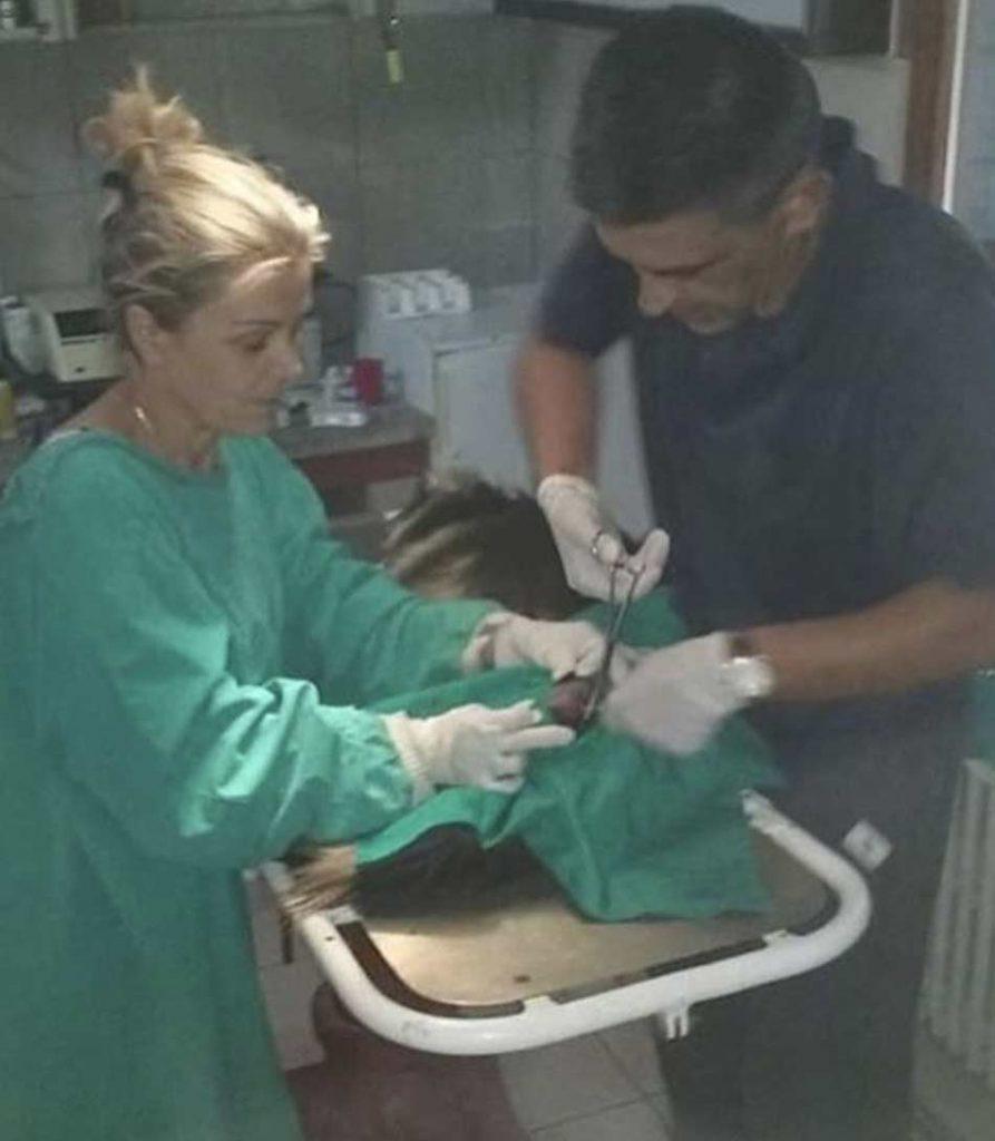 Veterinarska ambulanta Dr Vet Beograd